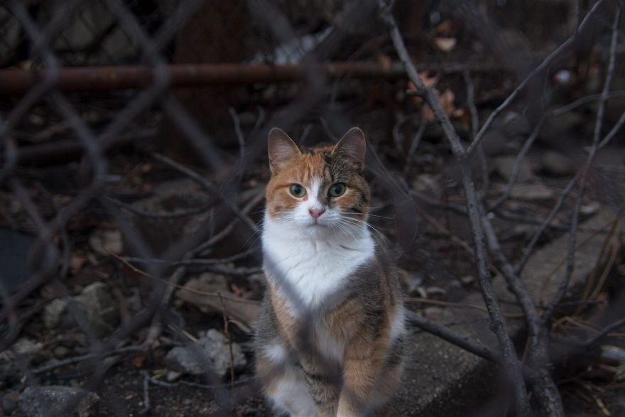 A Cat Behind a Fence