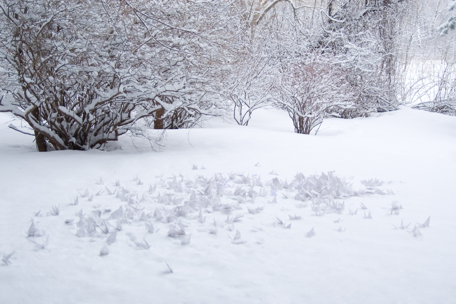 White paper cranes scattered in the snow.